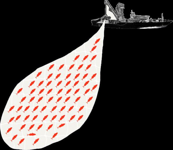 boot met 93% foute tonijn